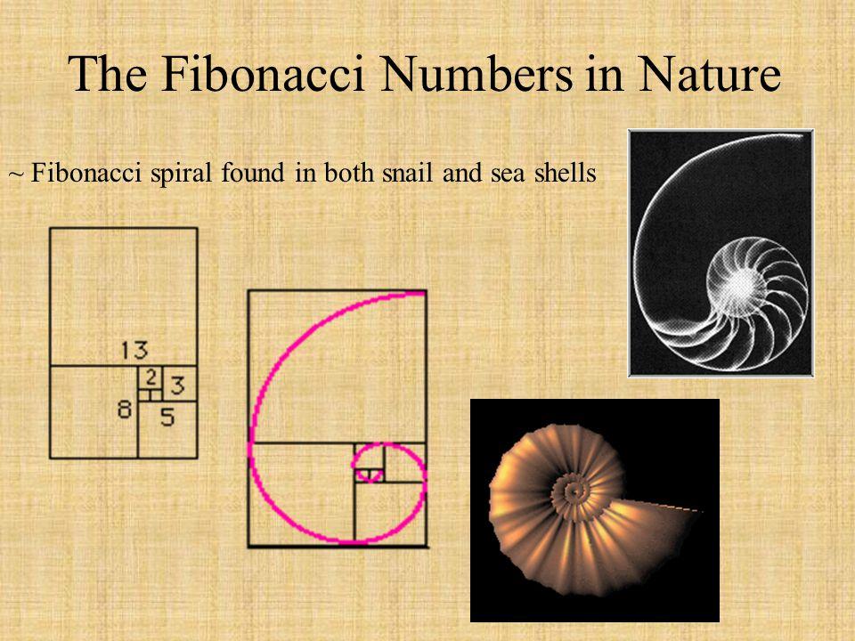 The Fibonacci Numbers in Nature