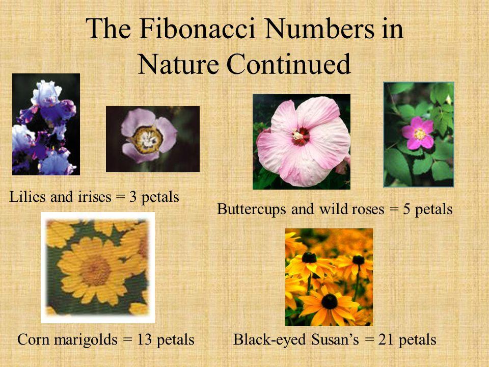 The Fibonacci Numbers in Nature Continued