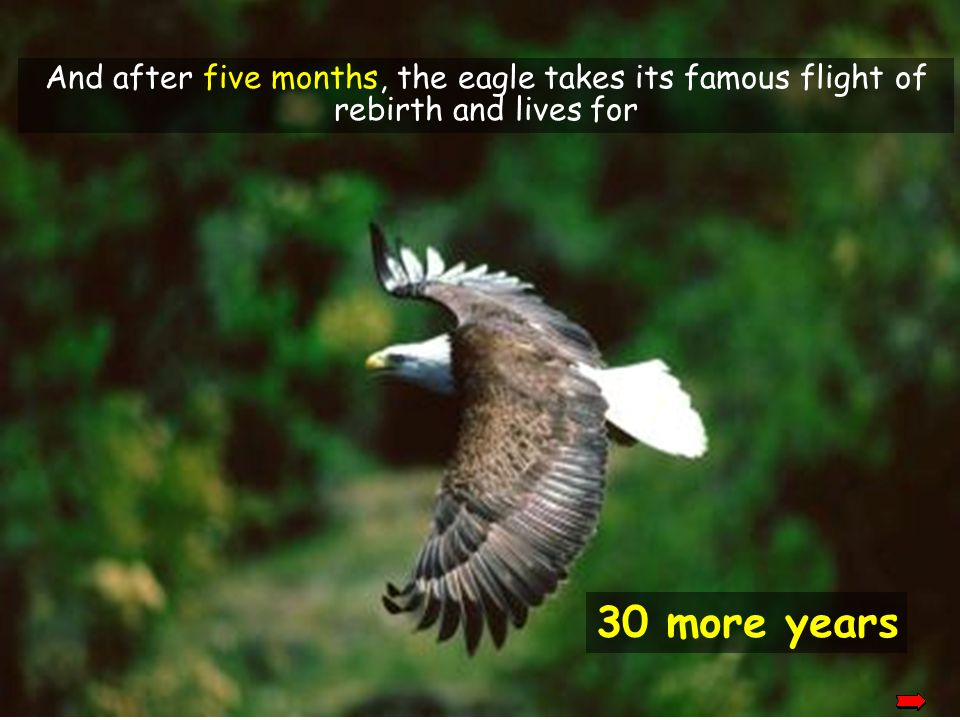 And after five months, the eagle takes its famous flight of rebirth and lives for