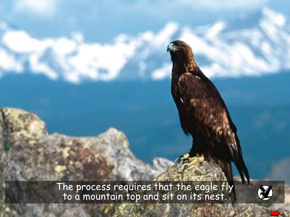 The process requires that the eagle fly
