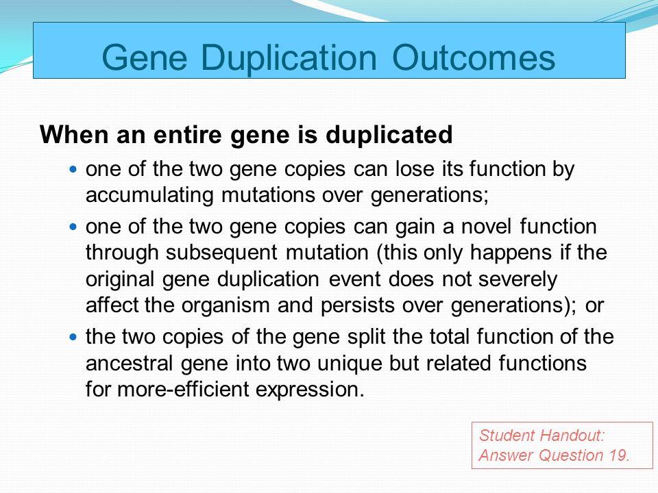 Gene Duplication Outcomes