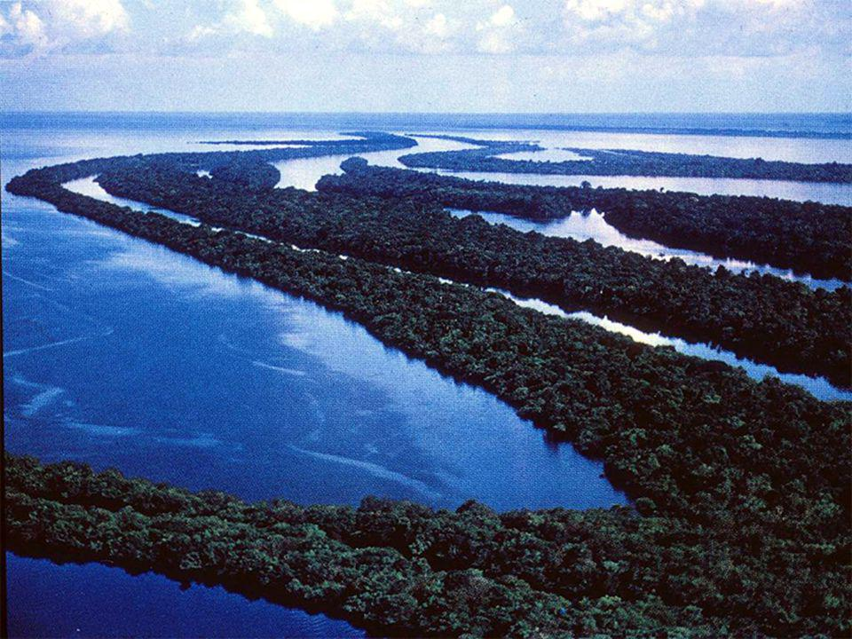 The Amazon, in an age of CO2 emissions and global warming, deserves to be called the lungs of the world, since recent measurements show that the region is still a net consumer of CO2 and a net supplier of oxygen.