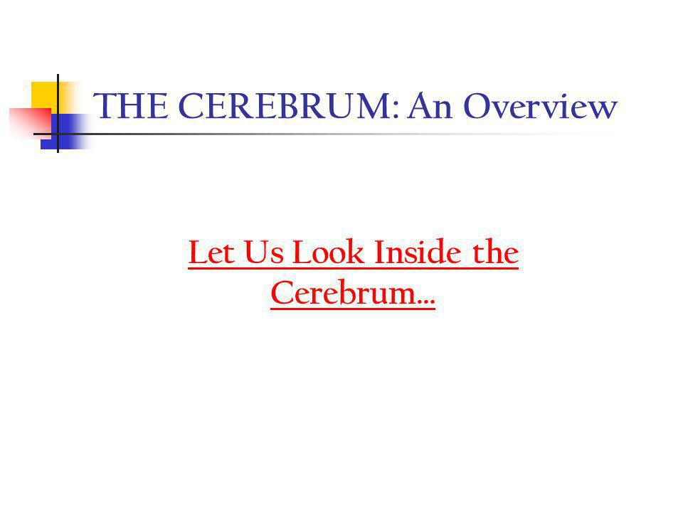 THE CEREBRUM: An Overview
