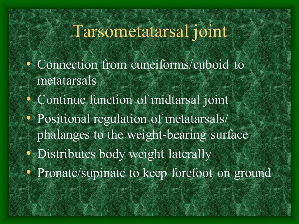 Tarsometatarsal joint