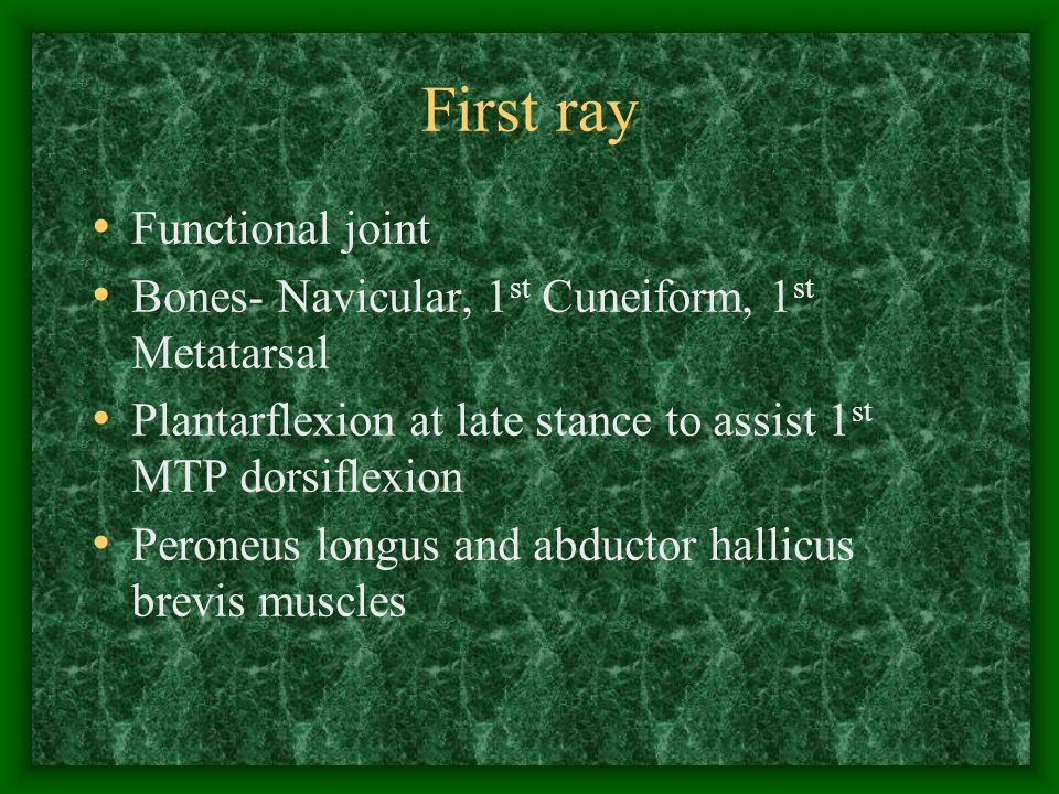 First ray Functional joint
