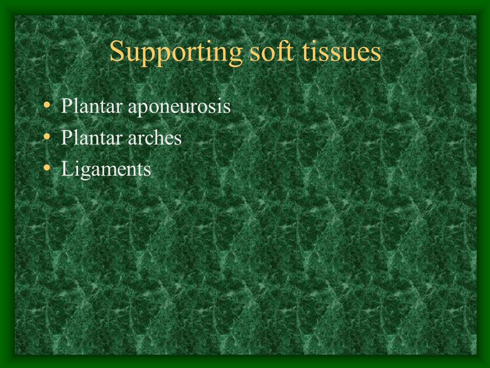 Supporting soft tissues