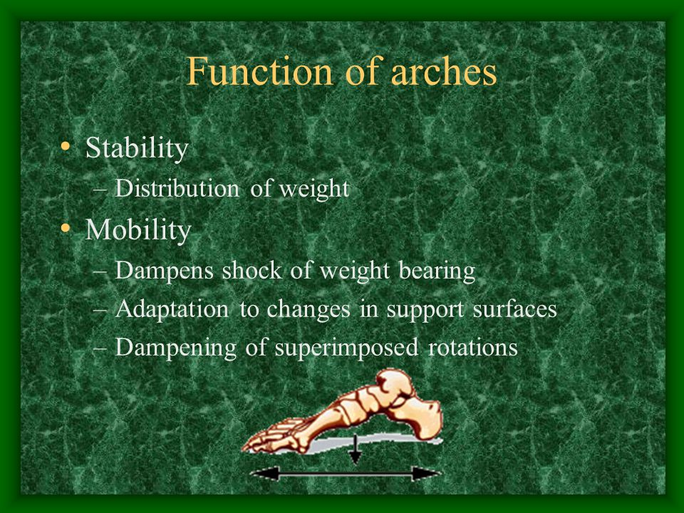 Function of arches Stability Mobility Distribution of weight