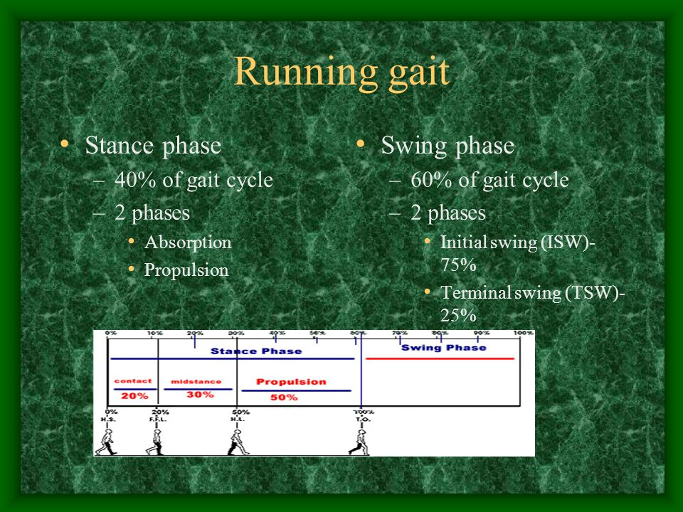 Running gait Stance phase Swing phase 40% of gait cycle 2 phases