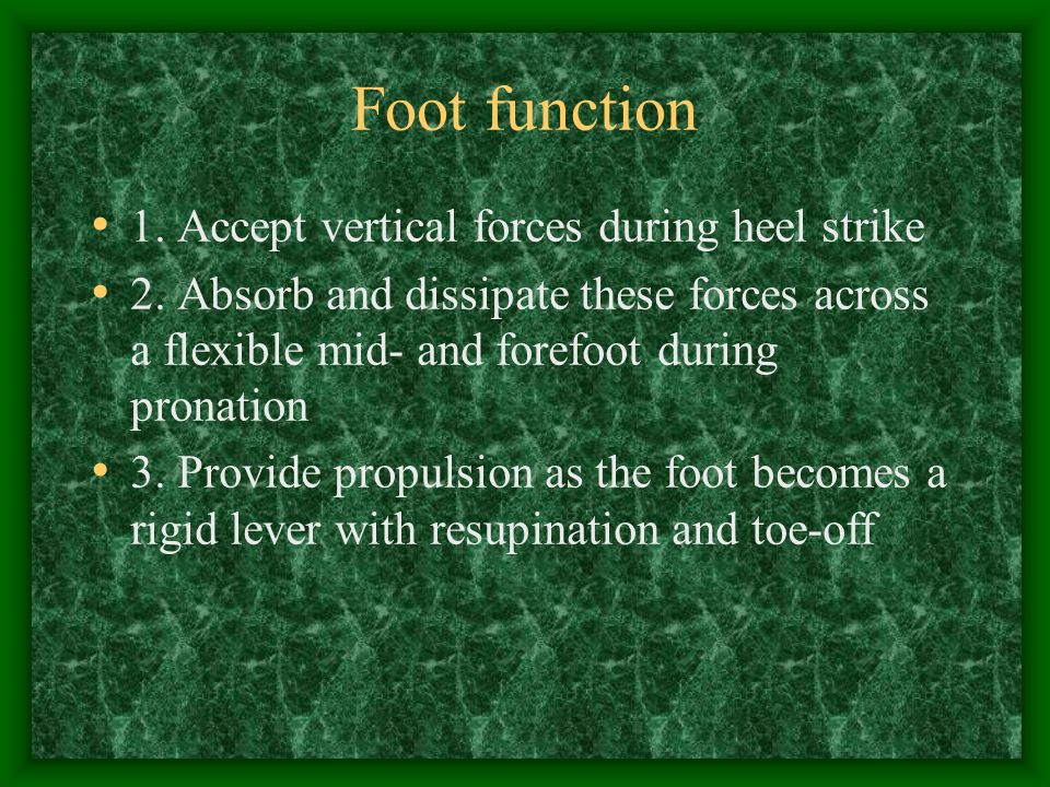 Foot function 1. Accept vertical forces during heel strike