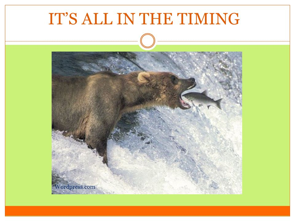 IT'S ALL IN THE TIMING Wordpress.com