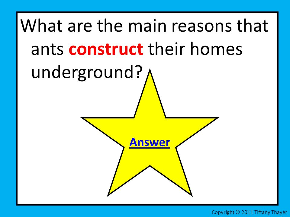 What are the main reasons that ants construct their homes underground
