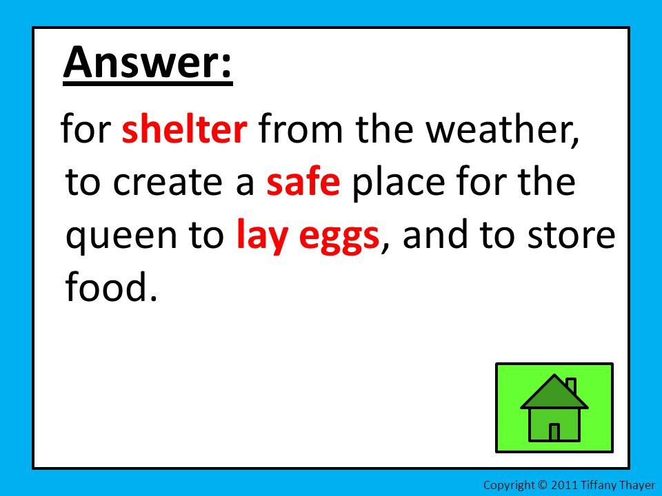 Answer: for shelter from the weather, to create a safe place for the queen to lay eggs, and to store food.