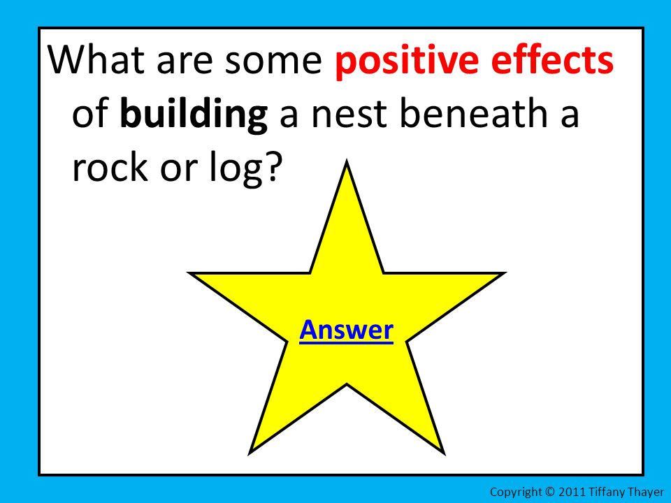 What are some positive effects of building a nest beneath a rock or log