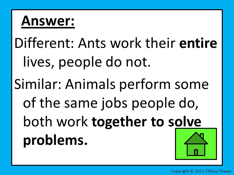 Answer: Different: Ants work their entire lives, people do not