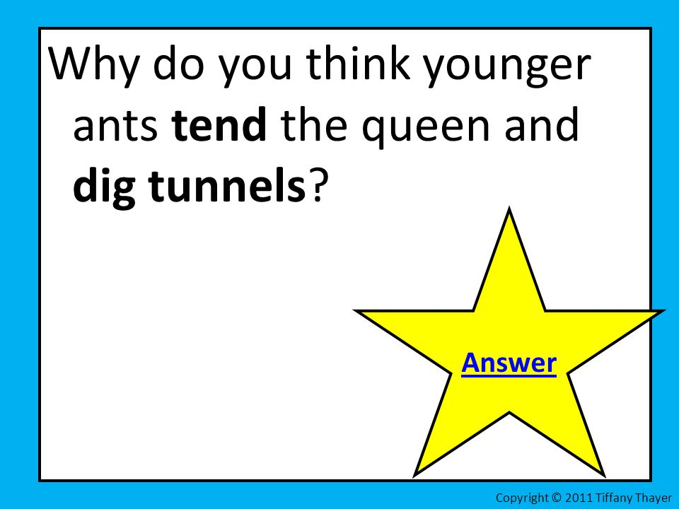 Why do you think younger ants tend the queen and dig tunnels