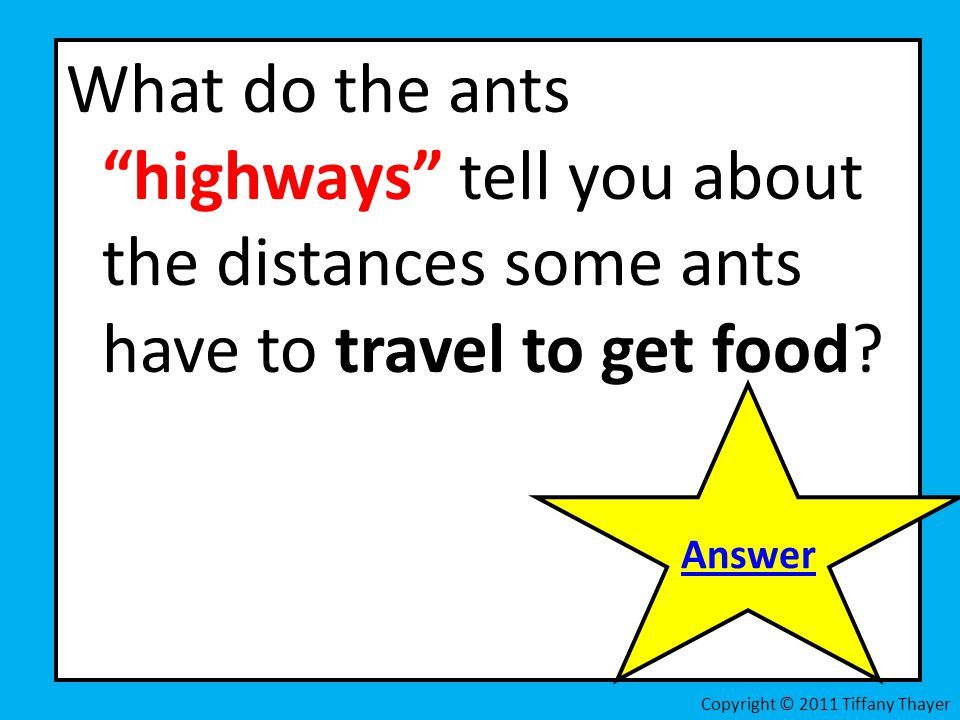 What do the ants highways tell you about the distances some ants have to travel to get food
