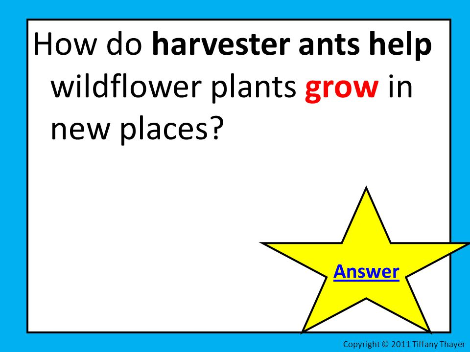 How do harvester ants help wildflower plants grow in new places