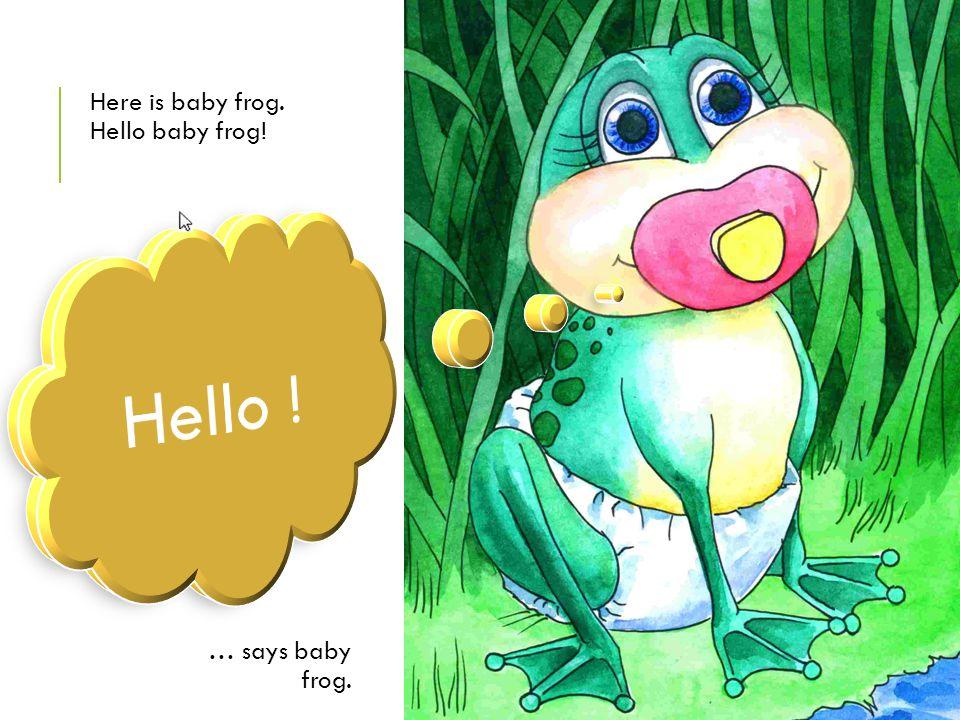 Here is baby frog. Hello baby frog!