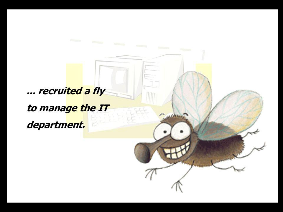 ... recruited a fly to manage the IT department.