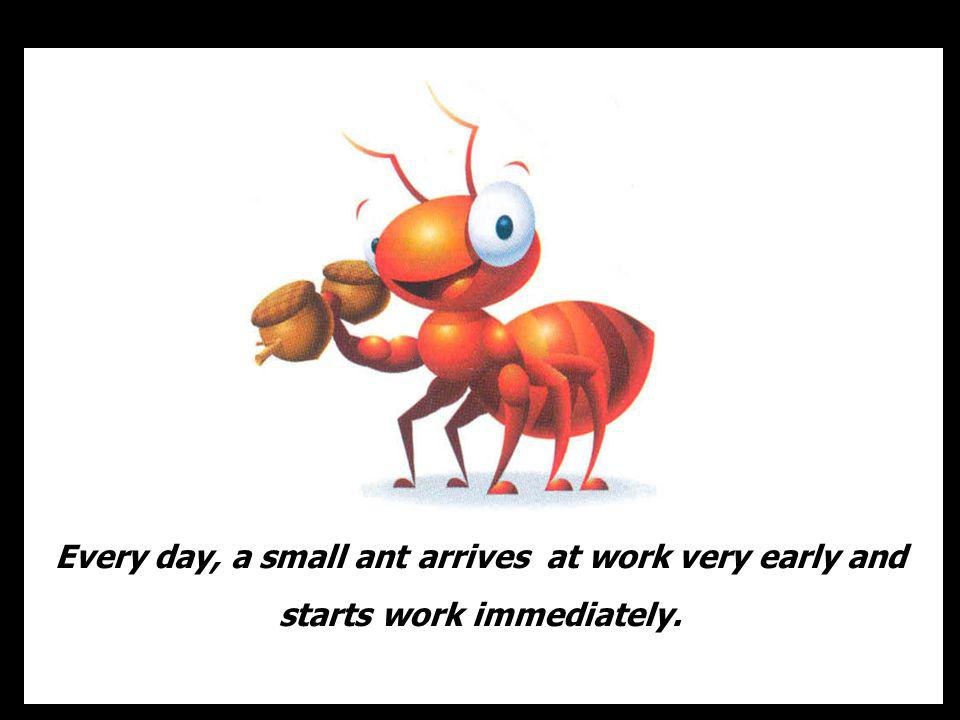 Every day, a small ant arrives at work very early and starts work immediately.