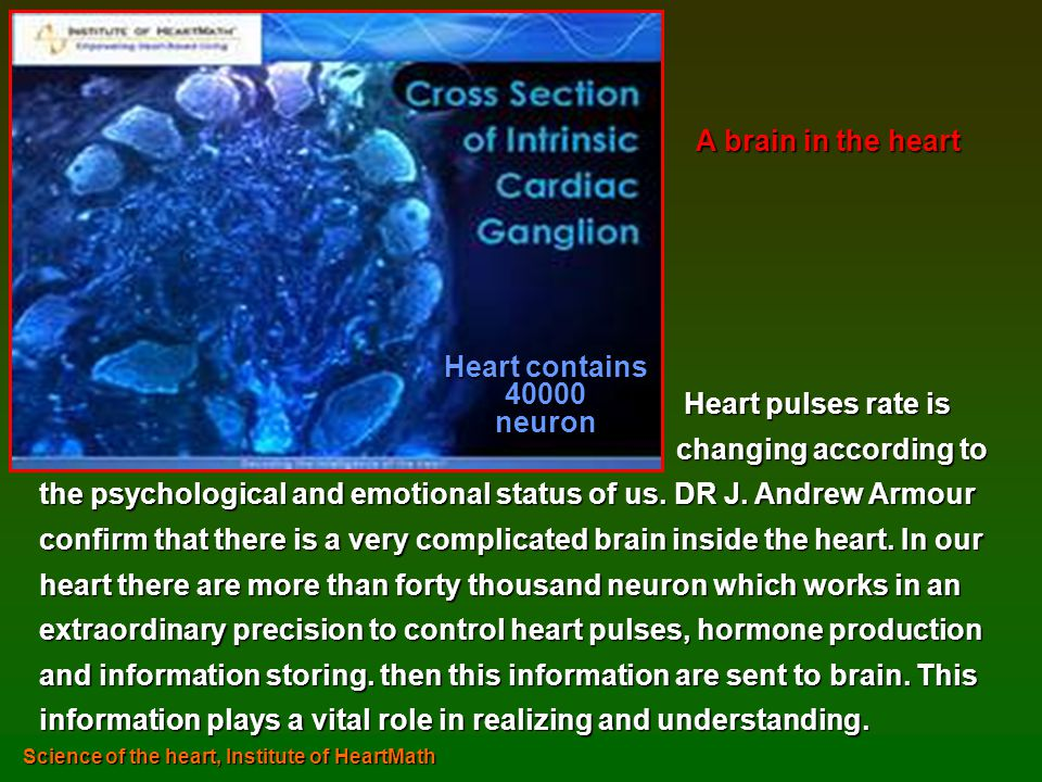 A brain in the heart Heart contains 40000 neuron Heart pulses rate is