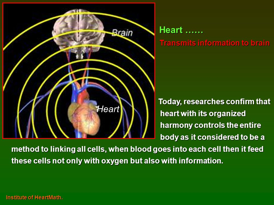 Heart …… Heart Transmits information to brain