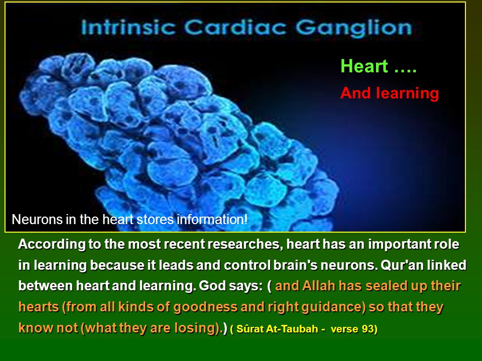 Neurons in the heart stores information!