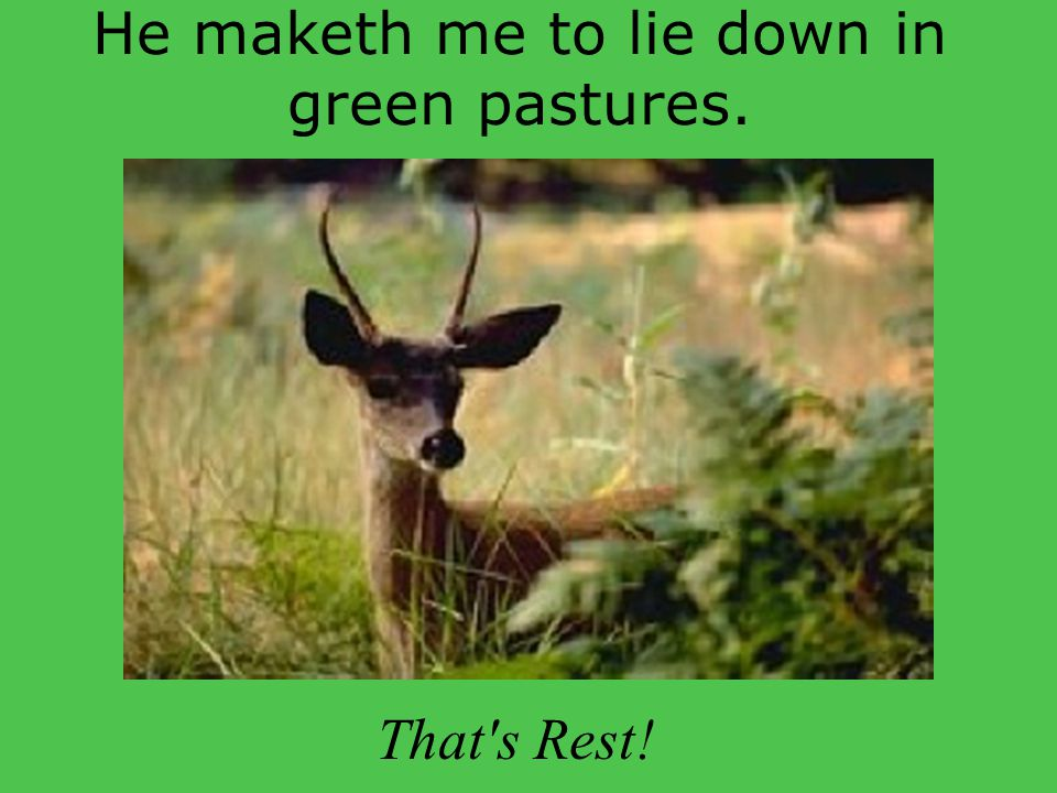 He maketh me to lie down in green pastures.