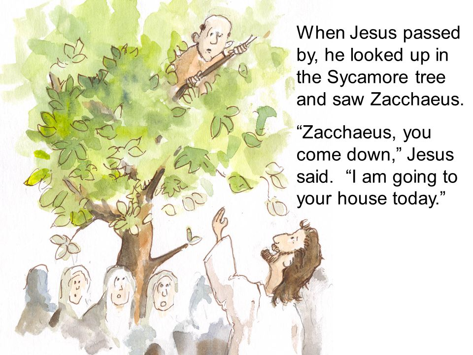 When Jesus passed by, he looked up in the Sycamore tree and saw Zacchaeus.