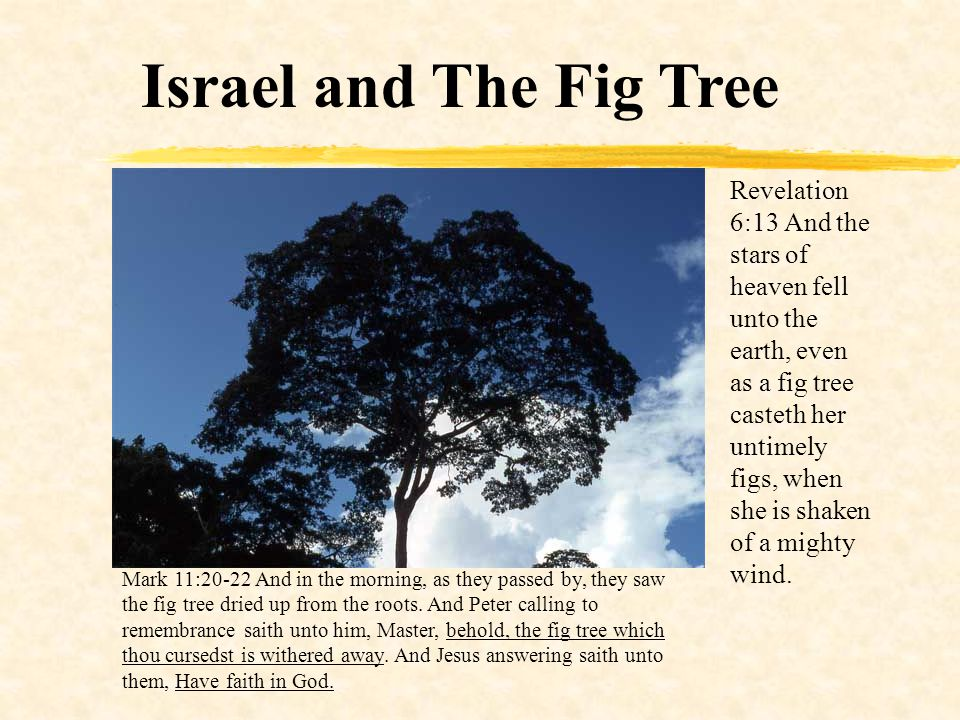 Israel and The Fig Tree