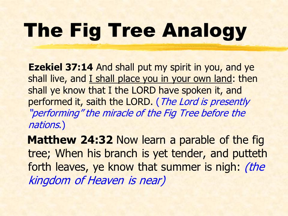 The Fig Tree Analogy