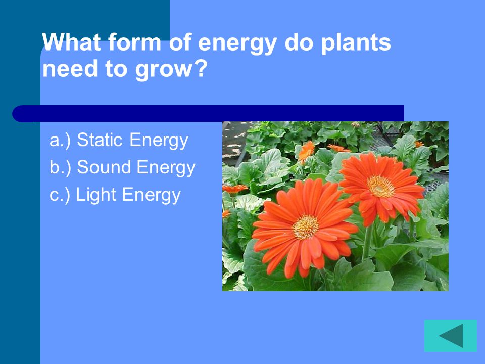 What form of energy do plants need to grow