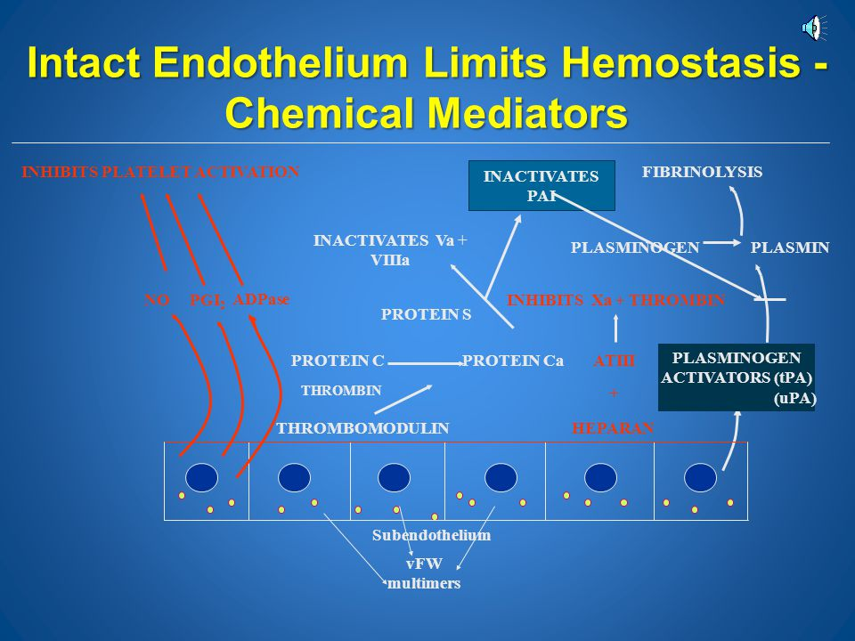 Intact Endothelium Limits Hemostasis - Chemical Mediators