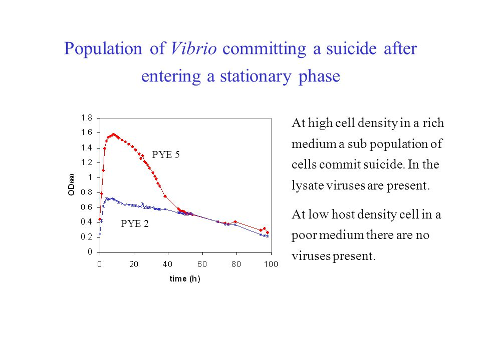 Population of Vibrio committing a suicide after entering a stationary phase