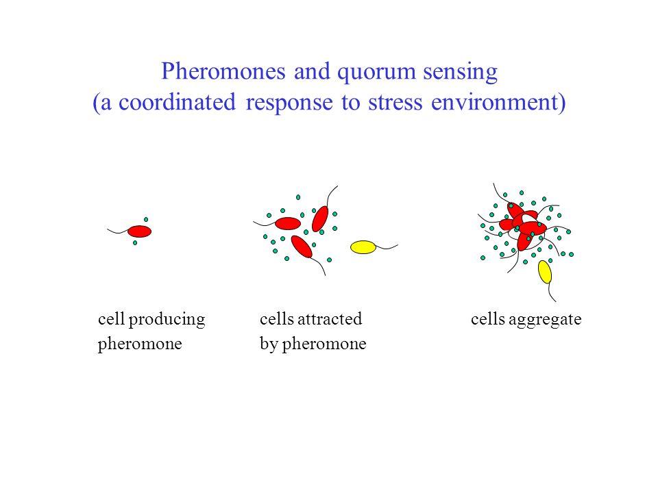 Pheromones and quorum sensing (a coordinated response to stress environment)
