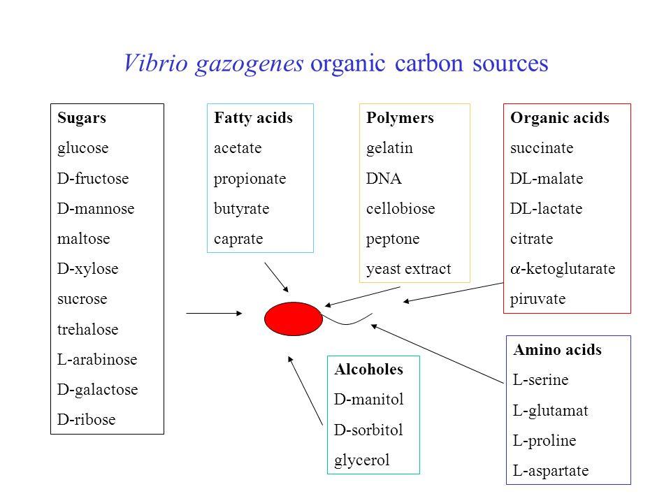 Vibrio gazogenes organic carbon sources