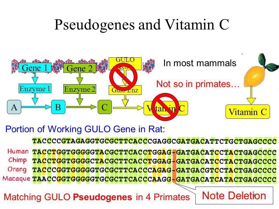 Pseudogenes and Vitamin C