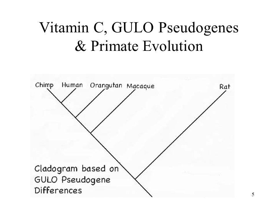 Vitamin C, GULO Pseudogenes & Primate Evolution