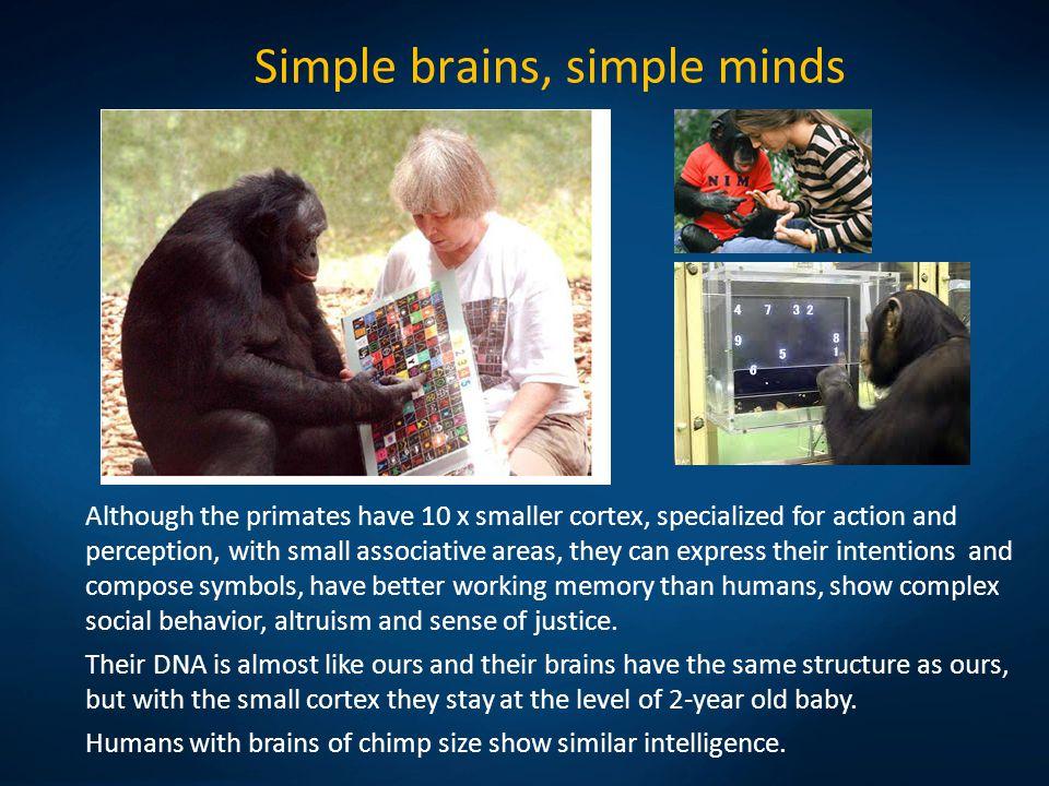 Simple brains, simple minds