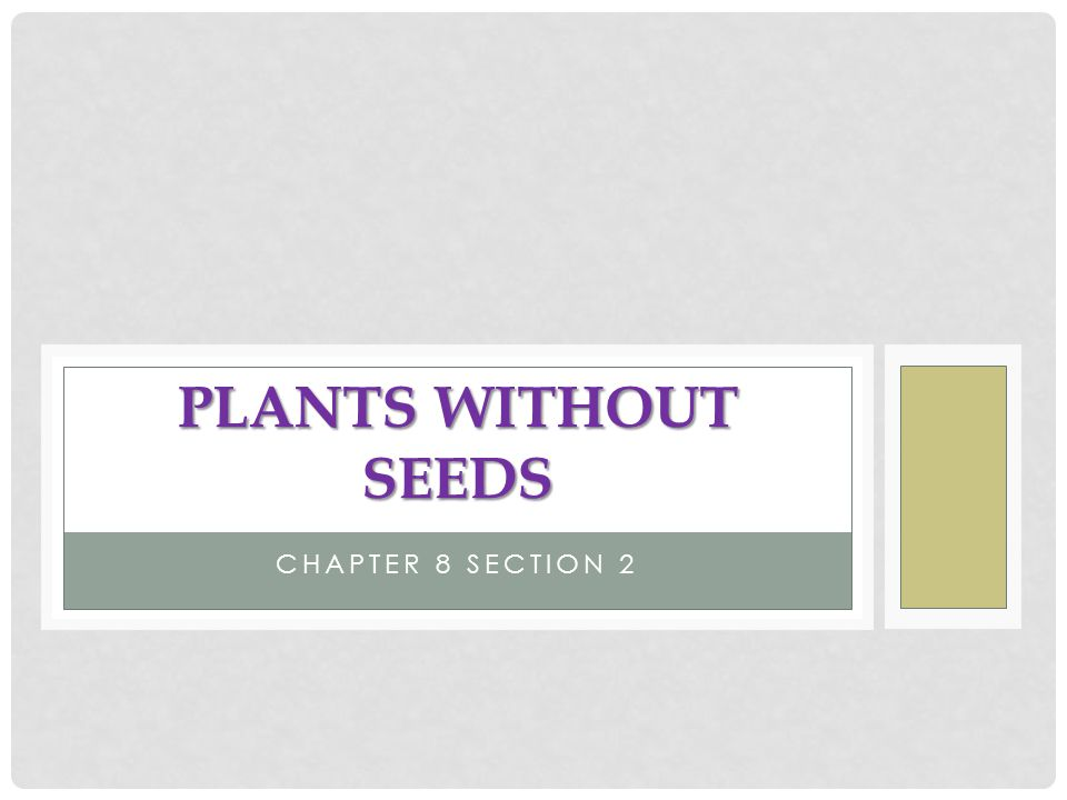 Plants Without Seeds Chapter 8 Section 2