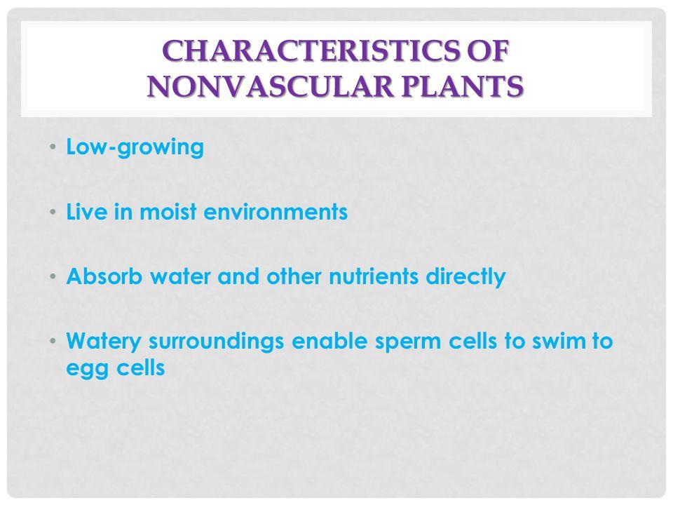Characteristics of Nonvascular Plants