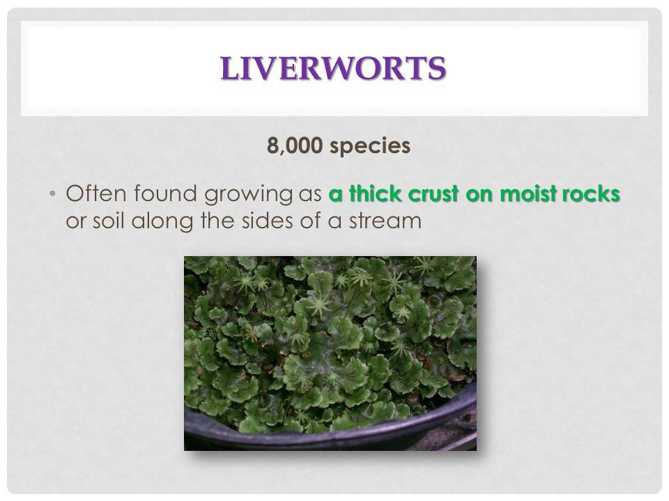 Liverworts 8,000 species.