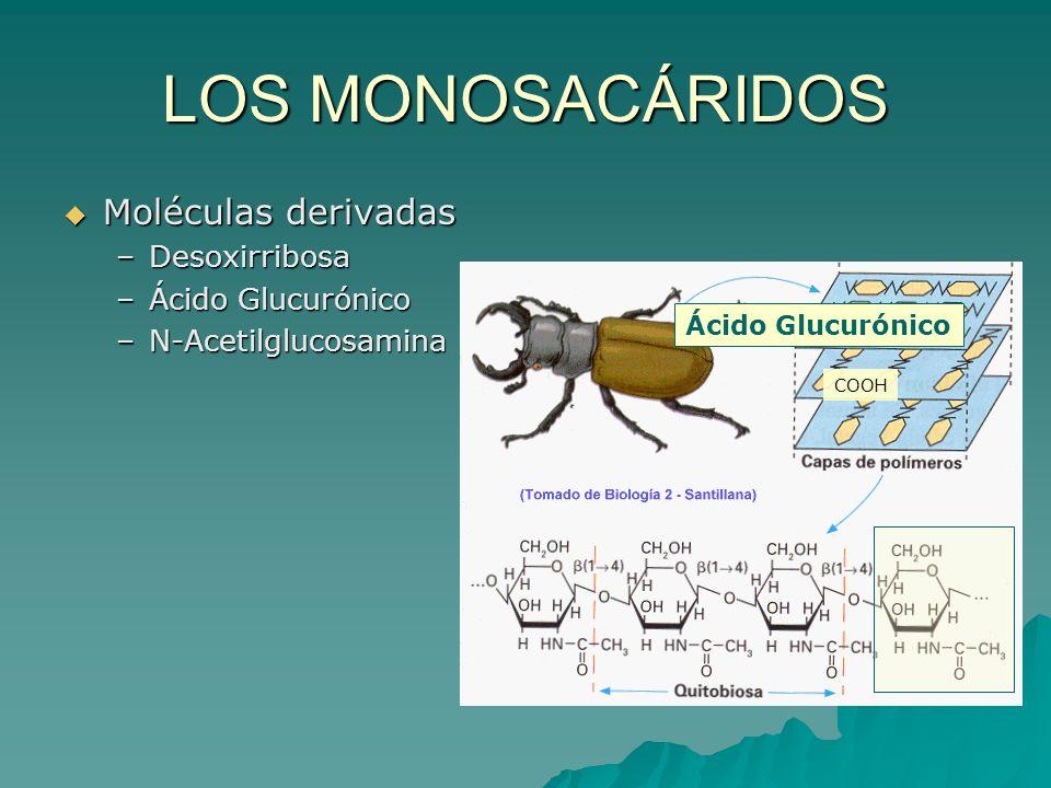 LOS MONOSACÁRIDOS Moléculas derivadas Desoxirribosa Ácido Glucurónico