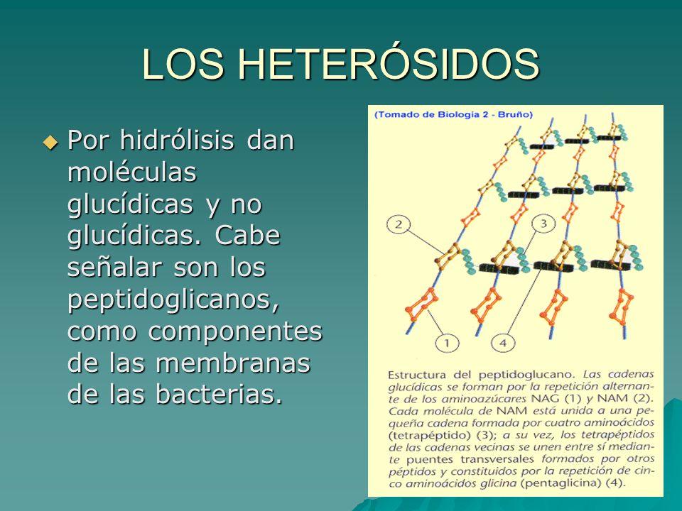 LOS HETERÓSIDOS