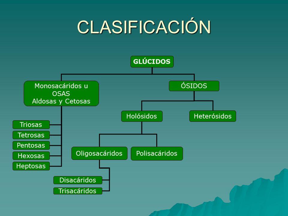 CLASIFICACIÓN GLÚCIDOS Monosacáridos u OSAS ÓSIDOS Aldosas y Cetosas