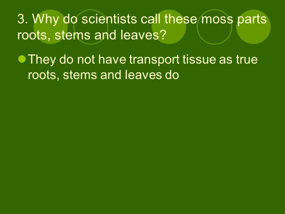 3. Why do scientists call these moss parts roots, stems and leaves