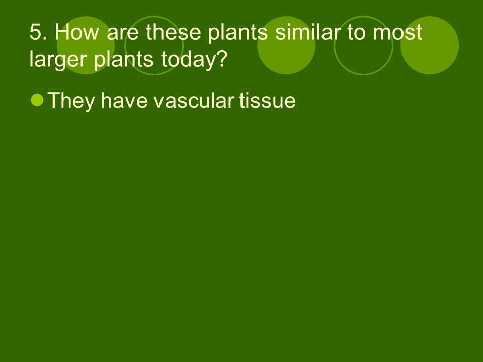 5. How are these plants similar to most larger plants today