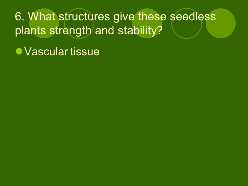 6. What structures give these seedless plants strength and stability