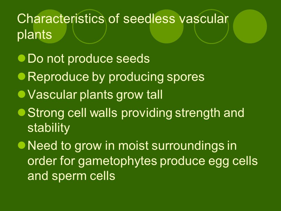 Characteristics of seedless vascular plants