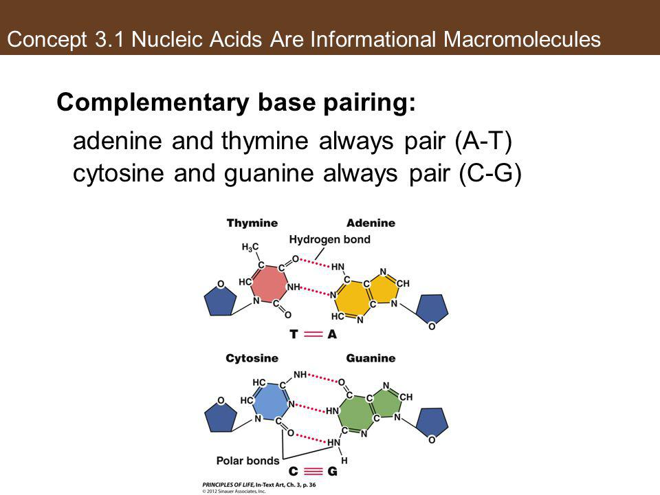 Concept 3.1 Nucleic Acids Are Informational Macromolecules